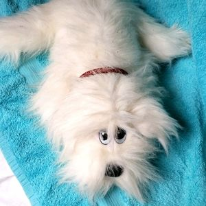 ⚡Host Pick⚡Vintage Tonka Pound Puppy